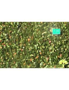 (920-33) Beech foliage...