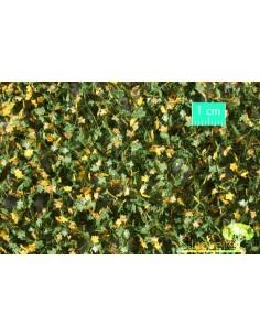 (930-23) Maple foliage...
