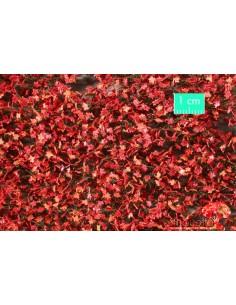 (930-25) Maple foliage...