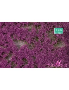 (791-28) Groundcover violet