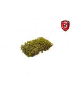 Arbusti cm.15x15 - Verde...